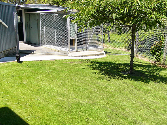 German Shepherd Dog Breeding Facility